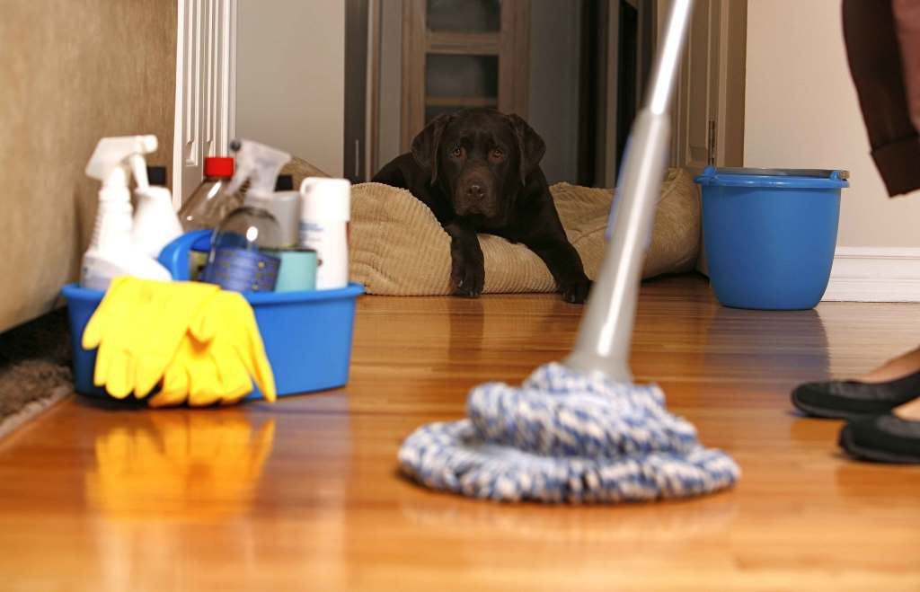 keekeeklean cleaning services